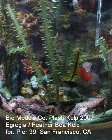 PIC00004Egregia pier 39 SF