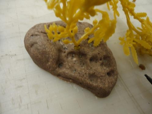 Sargassum with weighted roc 1