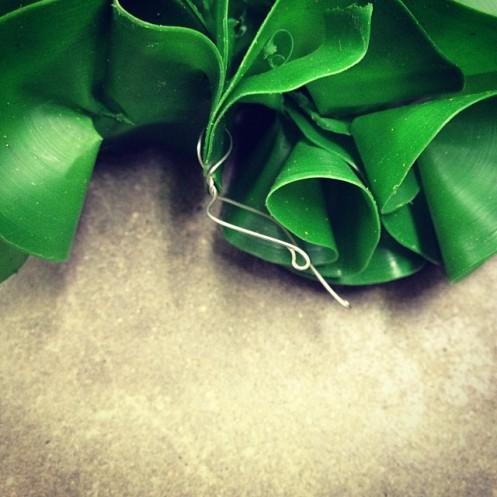 sea_lettuce_no1_4