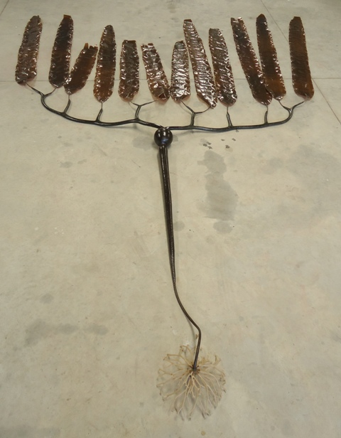 Elk Kelp 2