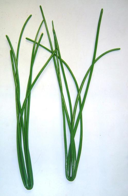 BMC Seal grass - Copy