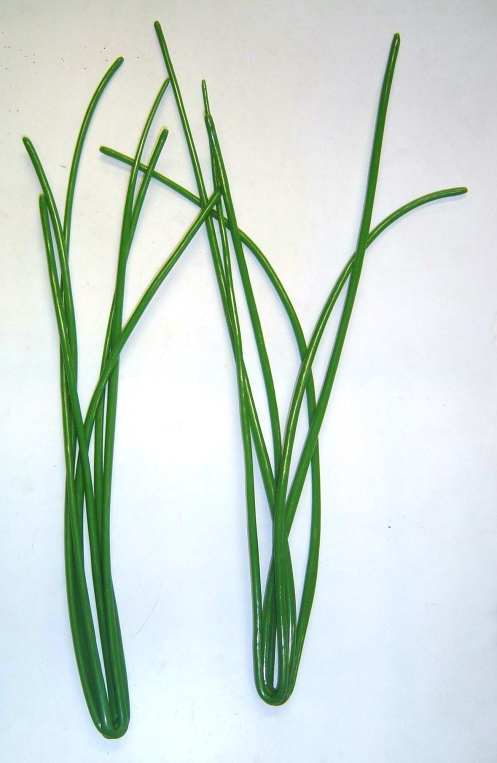 BMC Seal grass - Copy