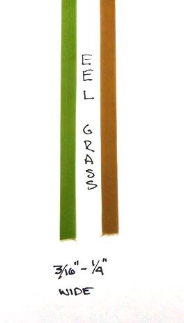 Eel Grass