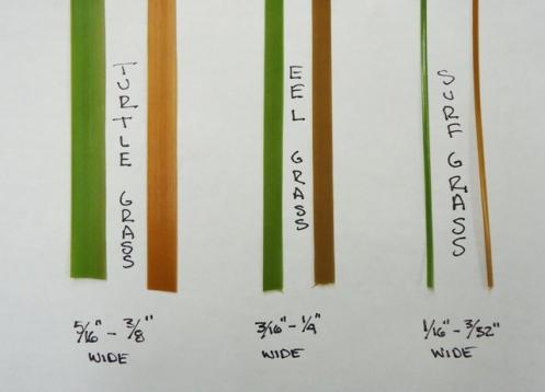 Grass sizes